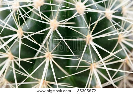 Sharp white thorns on a green cactus.