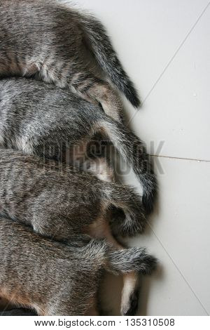 Four adorable funny Cute Kitten cat's tails and leg part lay down in line. Feeling sleep well happy together with family.