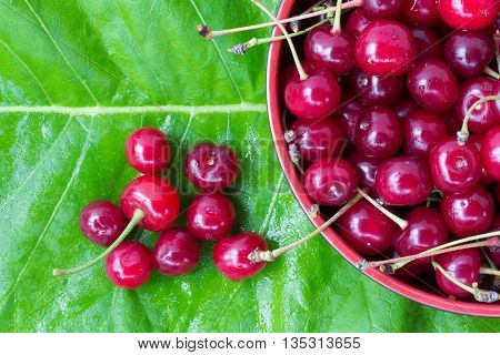 red ripe cherries with tails in a circular plate on a green leaf of burdock. close-up view from above