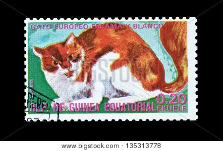 EQUATORIAL GUINEA - CIRCA  1974 : Cancelled postage stamp printed by Equatorial Guinea, that shows European domestic cat.