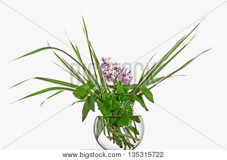 Bouquet of a lilac and decorative sedge in a glass vase. It is isolated on a white background