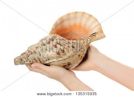 female hands with shell