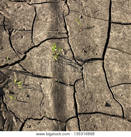 dry cracked earth and little sprouts breaking through