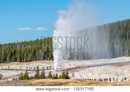 Visitors are watching Beehive Geyser erupting in Yellowstone National Park