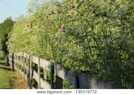 fence line with wild flowers in the sun