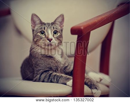 The surprised striped cat lies on a chair.