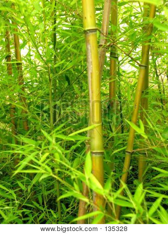 Bamboo Forest Close