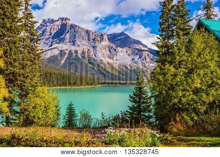 Blossoming glade in coniferous forest. Beautiful autumn day on the Emerald Lake. Rocky Mountains, British Columbia, Canada