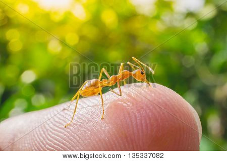 macro ant bite human finger in nature green background