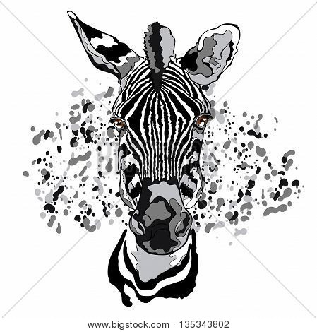 Animal. Zebra. Close-up. Splashes and drops of paint. Isolated vector object on white background.