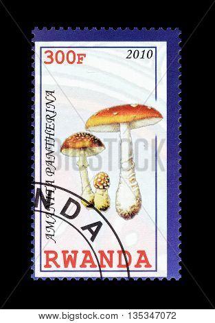 RWANDA - CIRCA 2010 : Cancelled postage stamp printed by Rwanda, that shows Amantia Patherina mushroom.