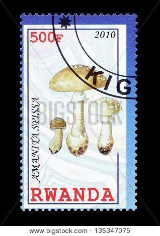 RWANDA - CIRCA 2010 : Cancelled postage stamp printed by Rwanda, that shows Amantia Spissa mushroom.