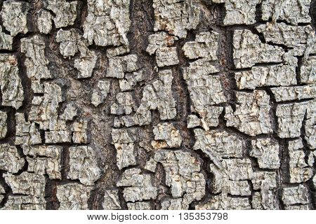 background nature surface the trunk of a tree