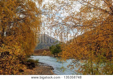 landscape with the mountain river and autumn foliage