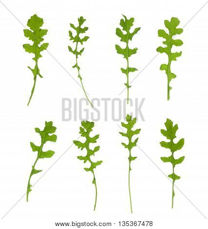 Multiple signle eruca sativa rucola arugula fresh green rocket salad leaves set isolated over the white background