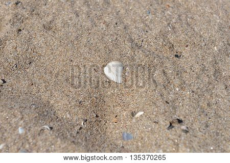 Close Up Of Sand On A Beach With One Big White Shell And Several Smaller Shells, Sandy Beach Backgro