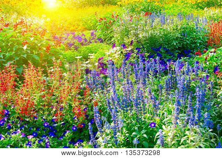 Colorful flower bed illuminated by sunlight Floral background.