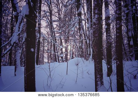 Dark Forest in Winter Night Mystery moody Landscape