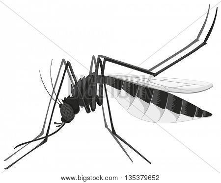Mosquito in black and white illustration