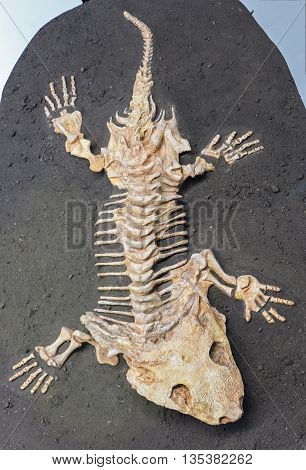Dinosaur fossil - detail of reptile - detail