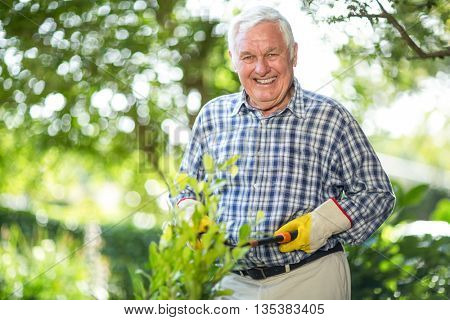 Portrait of senior man cutting plants with pruning shears in garden