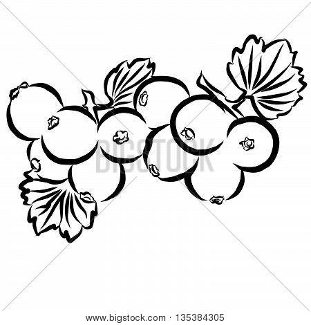 Cowberry Sketched Outline Vector Illusrtration