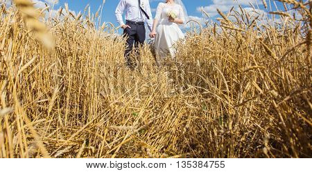 young beautiful wedding couple hugging in a field with grass eared. Retro colour
