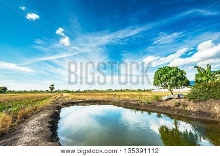 Agriculture land and canal in rural scene on blue sky background