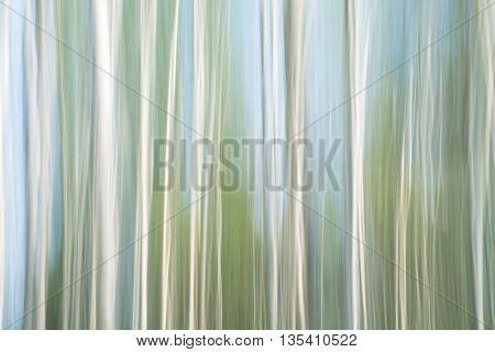 ICM shot of birch wood with some blue sky shining through