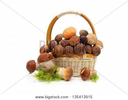wicker basket with wild mushrooms on a white background. horizontal photo.