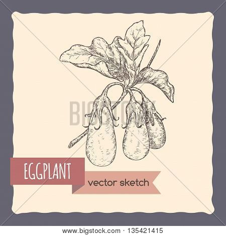 Fresh eggplants on a branch hand drawn vector sketch. Great for cooking, gardening, farming or agricultural design.