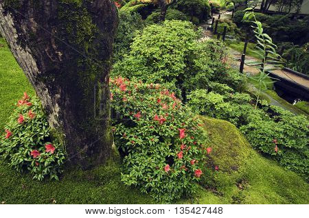 fresh wet blossom plants in Japanese zen garden by summer