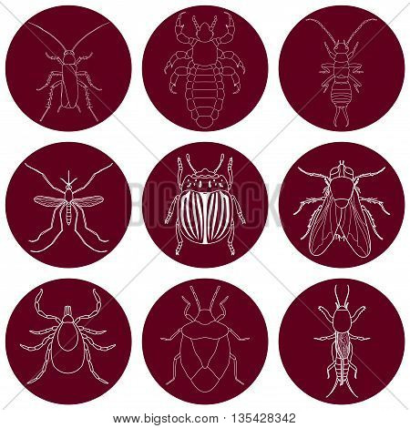 insect icons set. Earwig and tick, stink bug and cricket, fly and louse, colorado beetle and mosquito, vector illustration