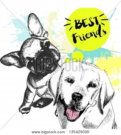 Vector hand drawn concept of labradoe retriever and french bulldog frienship. Color hand drawn domestic dog illustration. Decorated with blue blots. Best friends.