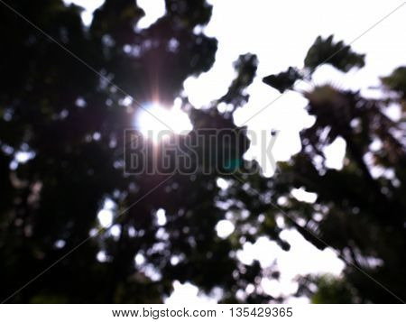 low key nature blur and sun through forbackground