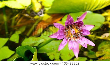 Close Up And Blur Background Honey Bee Flying And Bees Collecting Pollen In Deep Of Colorful Bloomin