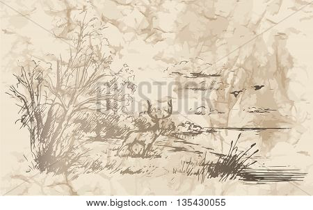 Hunting. Landscape. Moose came out of the forest and stands on the banks of the river. Vector illustration.