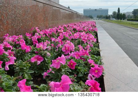 Pink flowers in flowerbed in city square