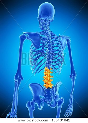 3d rendered, medically accurate illustration of the lumbar spine