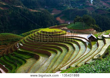Terraced rice field in water season in Mu Cang Chai, Vietnam.