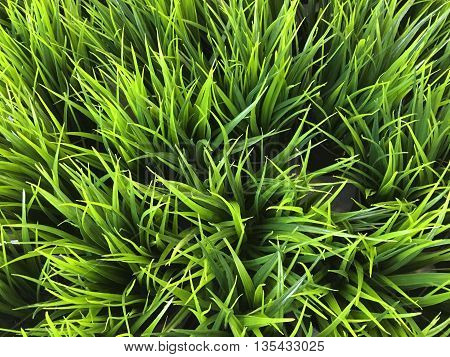 Flat lay top view of artificial plastic grass