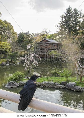 Tea house and crow in Imperial Palace Gardens, Kyoto