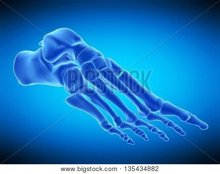 3d rendered, medically accurate illustration of the skeletal foot