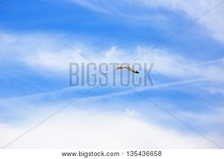 White seagull flying in the blue sky. Freedom concept. Place for text.