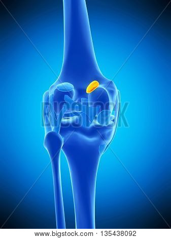 3d rendered, medically accurate illustration of the medial gastrocnemius bursa