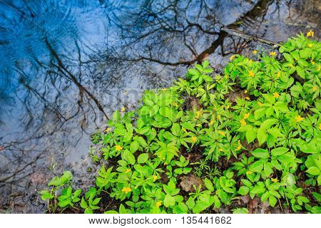 green leafs near water in puddle during rain