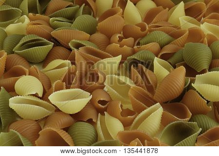 Raw Shells Macaroni Various Color Background
