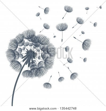 Abstract fluffy dandelion flower . Vector illustration