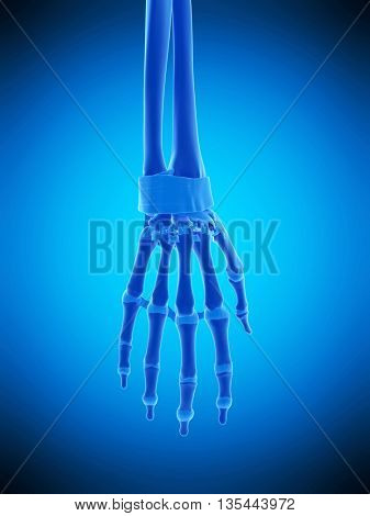 3d rendered, medically accurate illustration of the hand ligaments