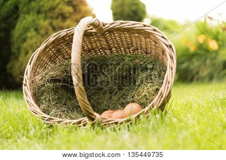 Eggs In A Basket On A Green Lawn